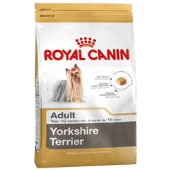 Yorkshire Terrier Adult Royal canin